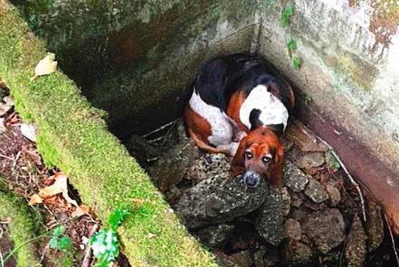 La petite chienne Tillie est restée une semaine auprès de sa congénère tombée dans une citerne