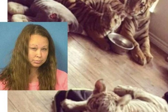 Accusée de mettre sa fille en danger, elle vivait avec des tigres, un couguar et des singes