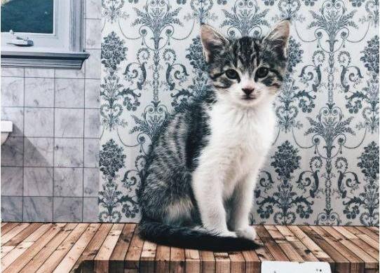 Découvrez la première télé-réalité… avec des chatons !